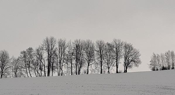 Bäume,schwarz-weiß Denken