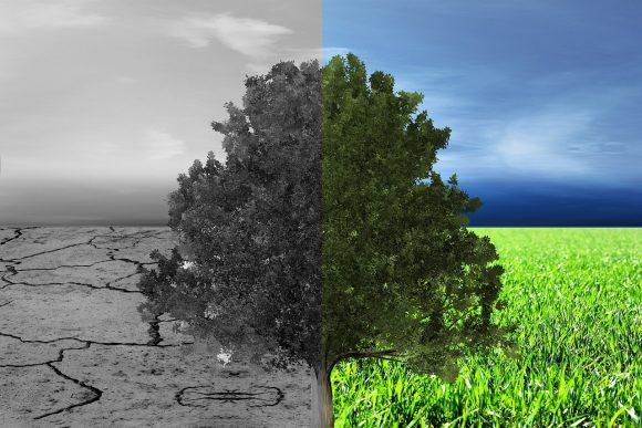 Baum,ausgetrocknet.wachsend